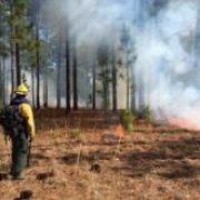 North Carolina TREX: New Perspectives with Prescribed Fire and Collaboration
